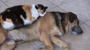 Bodrum-kedi-köpek-dostluğu
