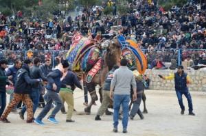 deve guresi festival (7)