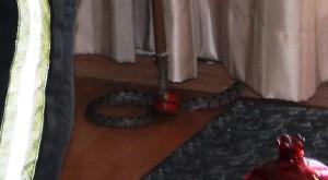 Bodrum-evde yılan