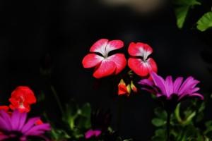 mazi_bahar_renkleri (9)