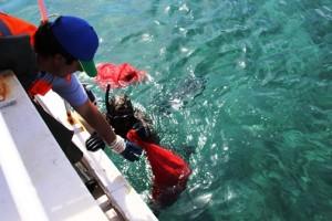 golkoy deniz dibi temizligi (6)