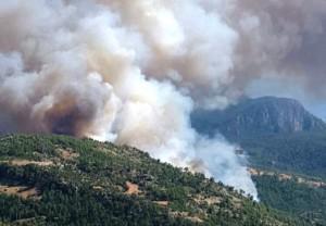 Orman yangını-gökova
