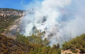 Miilas-orman yangını
