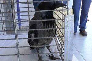 Bodrum Belediyesi Geçici Hayvan Barınağı
